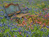 Bench in Field of Wildflowers Near Yoakum  Texas  USA