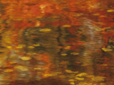 Abstract of Autumn Leaves and Reflections in Water  Lake Chippewa  Wisconsin  USA