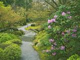 Japanese Garden at the Washington Park Arboretum  Seattle  Washington  USA