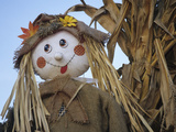 Scarecrow and Dead Corn Husks  Carnation  Washington  USA