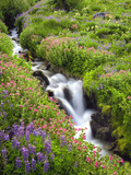 Elk Cove Creek Flowing Through Meadow of Wildflowers  Mt Hood Wilderness  Oregon  USA