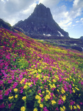 Wildflowers in Summer  Glacier National Park  Montana  USA