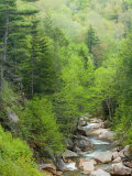 Spring on the Pemigewasset River  Flume Gorge  Franconia Notch State Park  New Hampshire  USA