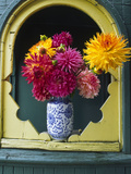 Dahlia Flowers in Vase  Ornate Window Frame  Bellingham  Washington  USA