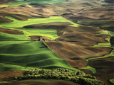 View of Palouse Farm Country Cultivation Patterns  Washington  USA