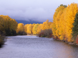 Yakima River and Trees in Autumn  Near Cle Elum  Kittitas County  Washington  USA