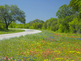 Curve in Roadway with Wildflowers Near Gonzales  Texas  USA