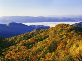 Forest in Autumn Color from Shot Beech Ridge  Great Smoky Mountains National Park  North Carolina