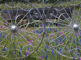 Wheel Gate and Fence with Blue Bonnets  Indian Paint Brush and Phlox  Near Devine  Texas  USA