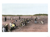 Cranberry Bog Pickers at Work on Cape Cod  Massachusetts  c1890