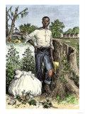 African-American Slave with Bag of Picked Cotton  c1800