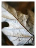 Fallen Leaves I