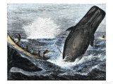 Whale Struck by a Harpoon While Breaching  c1800