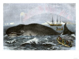 Longboat Crew Attacking a Whale with Hand Harpoons in the Arctic  c1800