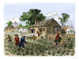 Cultivation of Tobacco in Colonial Virginia