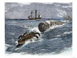 Angry Whale Chasing a Harpoon Boat