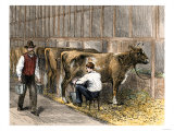 Milking-Time in a Dairy Barn  c1870