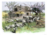 Sheep Near a Cottage in West Rutland  Vermont  c1880