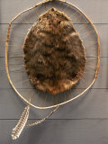 Beaver Pelt Stretched on a Sapling Frame and Laced with Rawhide Papier Photo