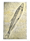 William Clark&#39;s Sketch of a Trout in the Lewis and Clark Expedition Diary
