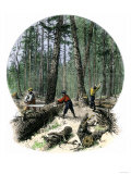 Minnesota Loggers Cutting Trees and Sawing Logs with a Two-Man Saw  c1860