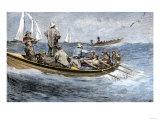 Dories Racing for a School of Fish  Atlantic Ocean  c1880