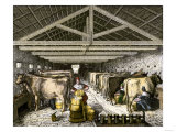 Farm Women Pouring Milk Into a Churn in Dairy Barn