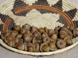 Acorns in a Native American Basket