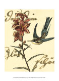 Hummingbird Reverie IV