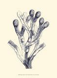 Indigo Kelp II