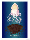 Jellyfish: Peromedusae
