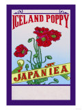 Iceland Poppy Tea