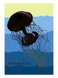 Jellyfish: Discomedusae