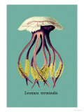 Jellyfish: Leonura Terminalis Reproduction d'art par Ernst Haeckel