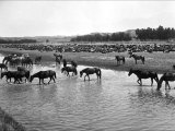 Horses Crossing the River at Round-Up Camp