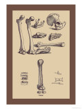 Bones with Tools