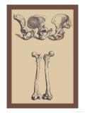 Pelvic Bones
