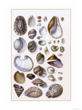 Shells: Gasteropoda and Trachelipoda