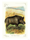 The Wild Boar Reproduction d'art