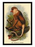 The Proboscis Monkey