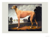 Greyhound on a Parkland Landscape