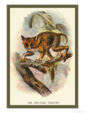 The Spectral Tarsier