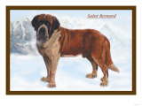 Smooth Coated Saint Bernard