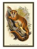 The Black-Eared Mouse Lemur