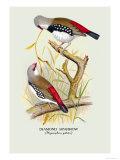 Diamond Sparrow