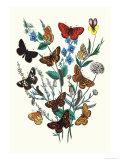 Butterflies: M Cynthia  M Athalia