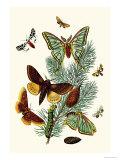Moths: E Pudica  E Pantheria  S Caecigena  L Lineosa