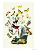 Moths: C Miniata  S Aurita