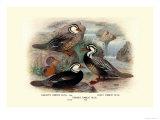 Garlepp'S  Jame's and Turner's Torrent Ducks