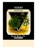 Herbs: Summer Savory